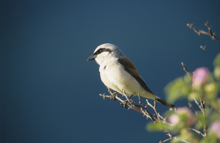 Paradis des oiseaux 7H - 8H