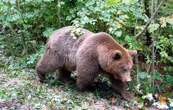 Tieranlage Braunbär