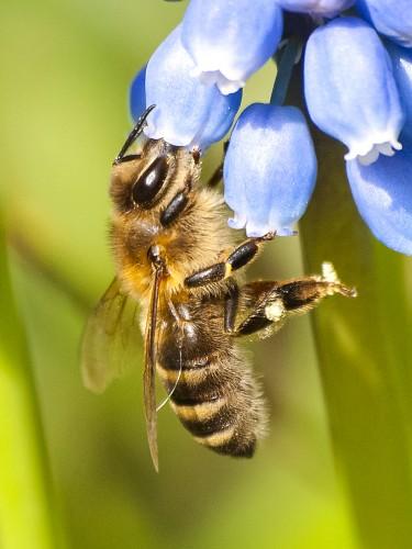 Bienen-Erlebnis