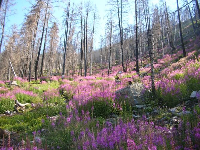 Waldbrandgebiet Leuk