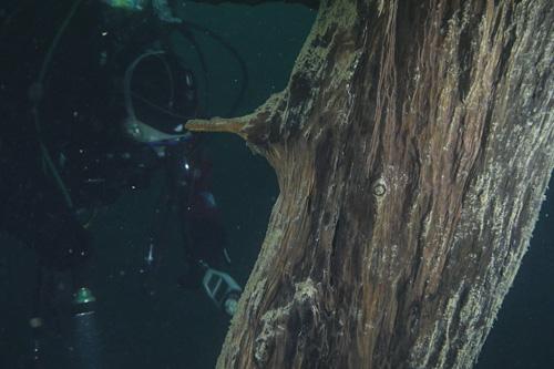 NATURAMA-Vortrag Unterwasserbäume in den Oberengadiner Seen