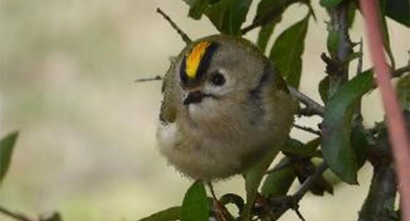 Vogelwelt – Einführungskurs