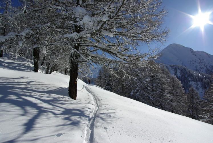 Chäserstatt Trail
