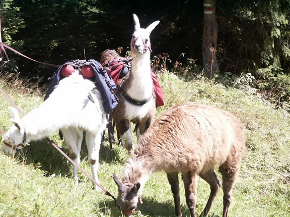 Trekking con lama, Safiental