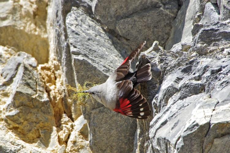 Oiseaux de la steppe rocheuse
