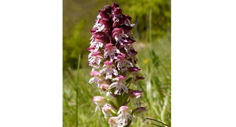 Orchideen und mehr!