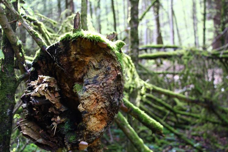 Öffentliche Führung «WaldWildnisWir»