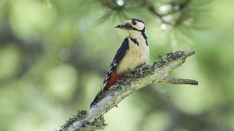 Ornithologie Las Crastatschas