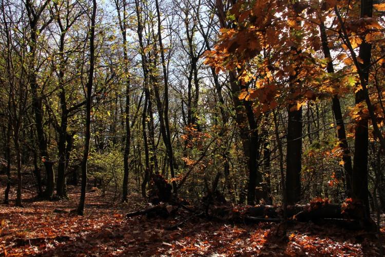Dans le bois de Maia