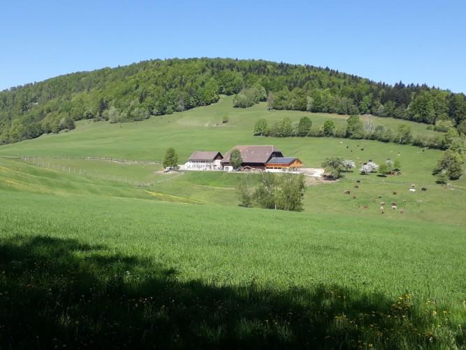 Bergwirtschaft Bremgarten