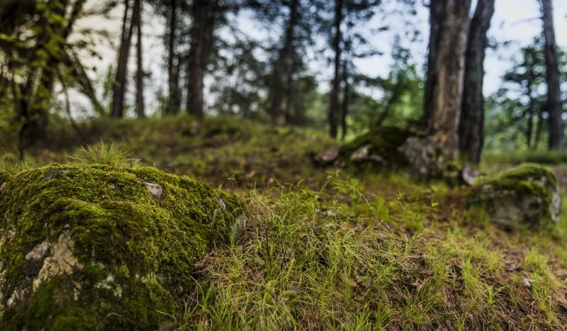 La nature, notre mère 3H - 4H