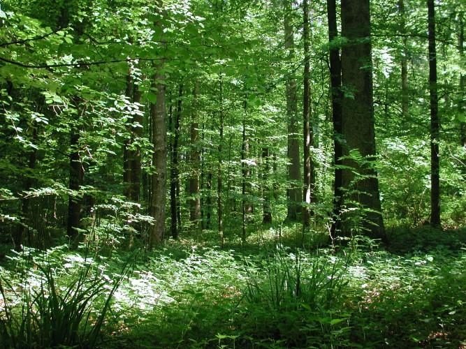 Journée dans la forêt