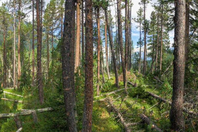NATURAMA-Vortrag Wood Wide Web. Von Pflanzen und Bäumen ... - © ©Schweizerischer Nationalpark/Hans Lozza
