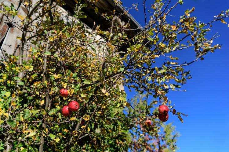 Obstbaumschnittkurs Parc Ela