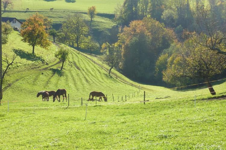 Zwei Dörfer-Rundweg