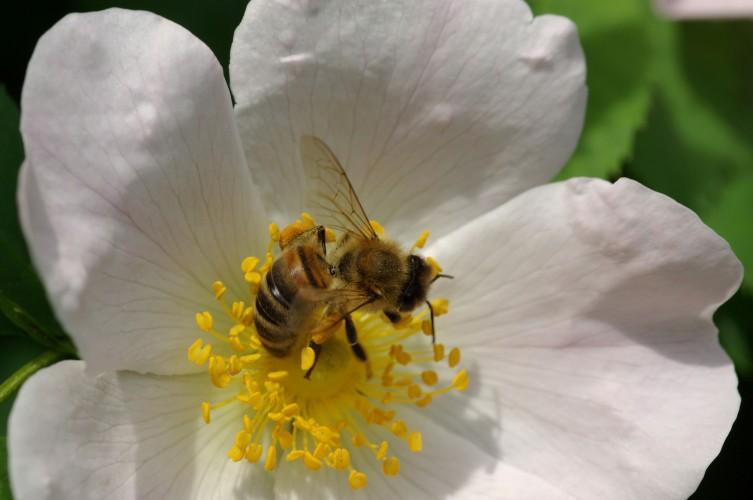 Wunderwelt der Bienen