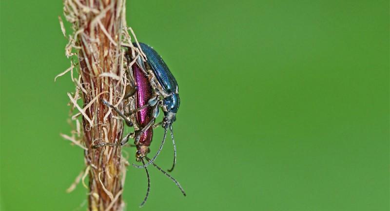 Jurapark-Kurs: Insektenleben
