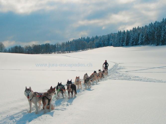 L'Appel du Grand Nord au Jura