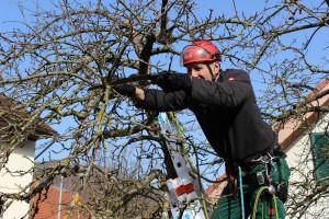 Obstbaum-Schnittkurs auf der Wildfarm Pfrunder