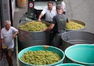 Schinznach-Dorf: Weinbaugenossenschaft Schinznach - © © All rights reserved by Visual Moment