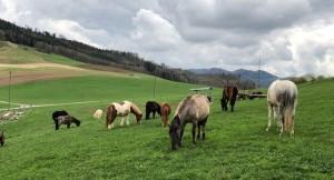 ABGESAGT: Ponyreiten