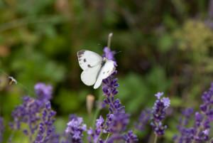 Kräuterwanderung – Essbare Wildpflanzen auf Wald & Wiese