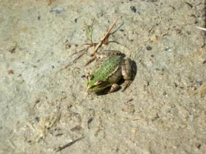 Amphibien Exkursion - © Naturpark Pfyn-Finges