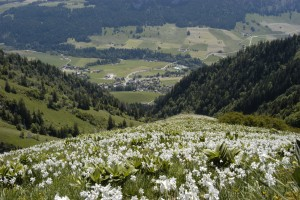 Botanischer Pfad Les Choucas