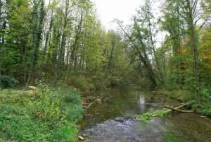 Durch die Auenlandschaft von Aarau nach Biberstein