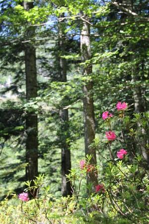 Im Waldreservat des Onsernone - © Roberto Buffi - Silvaforum