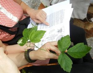 Angewandte Botanik - © Sonja Wunderlin