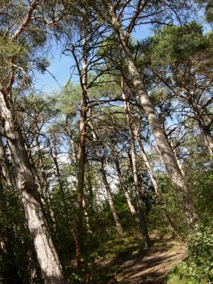 Wanderung durch den Pfynwald - © Naturpark Pfyn-Finges