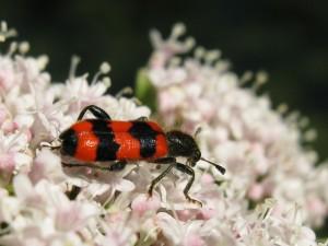 Insekten & Co. (5H - 7H) - © Jürg Zettel
