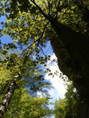 Tiefe Schlucht, sonnige Höhen - © Naturpark Thal, Sandra von Ballmoos