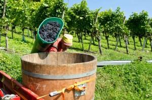 Fehr & Engeli Weinbau