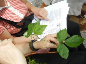 Botanik 1