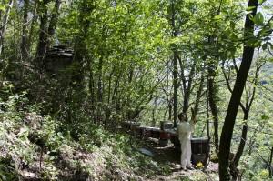 Apicoltura Centovalli - © Glauco Cugini - Progetto Parco Nazionale del Locarnese