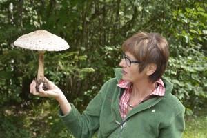 Geheimnis der Pilzwelt