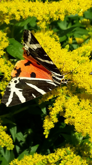 Erlebnis Naturgarten: die Jahreszeiten