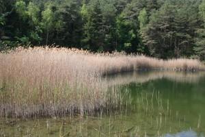 Intervention nature d'une journée: Entretien de biotope - © Naturpark Pfyn-Finges