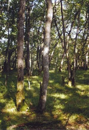 Bois de Chêne Echilly - © Pro Natura Vaud