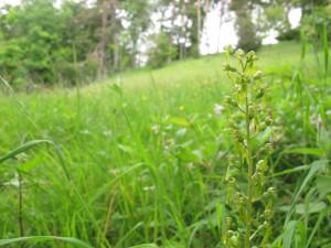 Naturschutzgebiet Malzrüti
