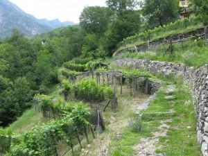 Die terrassierten Weinberge