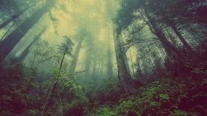 L'arbre, seigneur du Jorat