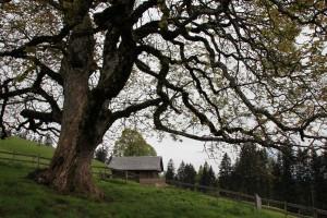 Exkursion Extravagante Bäume