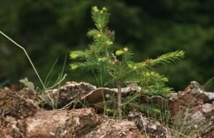 Walderlebnispfad Meniggrund