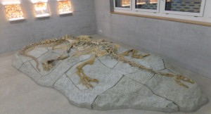 Die Plateosaurier von Frick
