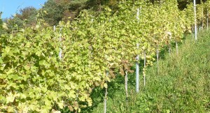 Weinbau Küpfer-Burkhard