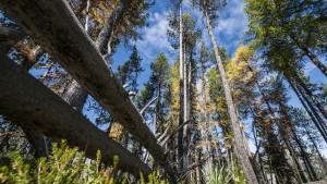 Waldökosystemforschung LWF - © SNP/Hans Lozza
