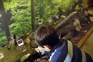 Naturmuseum im Besucherzentrum - © Wildnispark Zürich